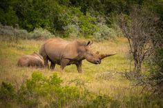 The risky and illegal trade is being fuelled by demand in Asia, where rhino horn in particular is believed to have, unproven, medicinal properties, including the ability to cure cancer.