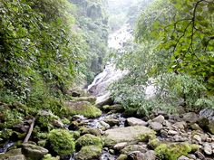 kutralam waterfalls - Yahoo Image Search Results Yahoo Images, Waterfalls, Image Search, River, Outdoor, Outdoors, Outdoor Games, The Great Outdoors, Rivers