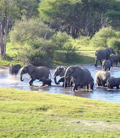 Home sweet home. Please never pay to see captive elephants. We have no right to steal their lives.