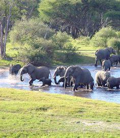 Wild elephants in Quirimbas natioal park , Mozambique