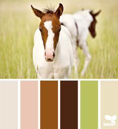 Horse hues