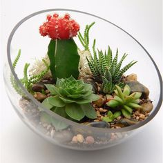 Cactus Succulent Half Moon Glass Terrarium (1 190 UAH) ❤ liked on Polyvore featuring home, home decor, floral decor, cactus terrarium, glass terrarium, glass home decor, succulent plant terrarium and colorful home decor