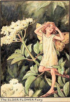 The Elder Flower Fairy, Genuine Antique Art, 1950 Cicely Mary Barker, Fairy Land, Fairy Tales, Vintage Fairies, Fairytale Art, Elderflower, Flower Fairies, Fantasy Illustration, Faeries