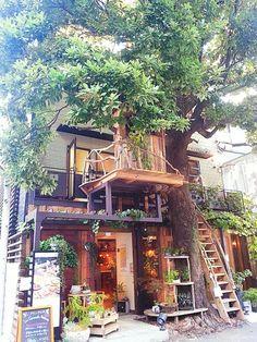 大きな木がカフェを守ってくれているかのよう。自然が近くにある、温かみのある外観です。