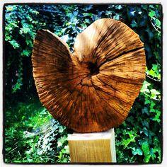 Wood ammonites