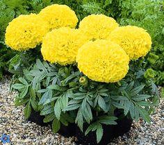 Обожаю эти желтые цветочки.