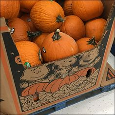 A perfect pairing is this Charlie Brown Great-Halloween-Pumpkin Sale theme. The Great Pumpkin is a seasonal character for the famous Charlie Brown comic. Charlie Brown Comics, Store Fixtures, Peanuts Gang, Painted Pumpkins, Halloween Pumpkins, Favorite Holiday, Pumpkin Carving, Pallet, Retail