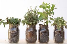 The endless possibilities of mason jars.