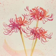 Hurricane Lilies, spider lilies, Chinese watercolor