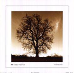 Winter Tree No. 1