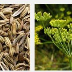 160 Jenis Khasiat Tanaman Obat dan Manfaatnya Lengkap dengan Cara Pengobatan - http://www.njamu.com/jenis-khasiat-tanaman-obat-dan-manfaatnya/
