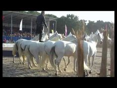 Lorenzo the flying french man, Horse Event 2014 - YouTube