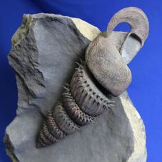 """This immaculately preserved and expertly prepared ammonite with remarkable shell structure is incomparably rare. Unlike most ammonites, which coil along a single plane, it belongs to a bizarre group of prehistoric cephalopods known as """"heteromorph"""" ammonites, which have uncoiled or irregularly coiled shells.   Species: Ostlingoceras puzosianum  Age: Albian Stage of the Lower Cretaceous - 108 million years old.  Location: Alpes-de-Haute-Provence, Southeastern France"""