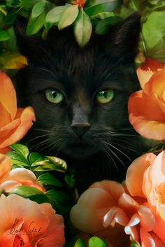 Cats black art kittens 66 Ideas for 2019 Pretty Cats, Beautiful Cats, Animals Beautiful, Cute Animals, Gorgeous Eyes, Beautiful Things, I Love Cats, Crazy Cats, Cool Cats