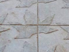 Panot Diagonal. Quatre panots dibuixen una fulla de plataner bord.  Fes clic per ampliar