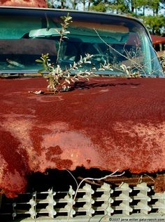 Mother nature vs. rusty vintage Cadillac photo
