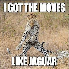 The Leopard With moves like a Jaguar. This song was playing when I found this, no joke!  Why does this make me laugh??