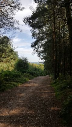 Cannock Chase 💚💙 West Midlands, Country Roads, Landscape, Nature, Naturaleza, Landscaping, The Great Outdoors, Natural, Mother Nature
