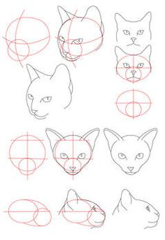 Animal Sketches, Animal Drawings, Cool Drawings, Drawing Animals, Cat Face Drawing, Drawing Heads, Cat Drawing Tutorial, Cat Anatomy, Cat Reference