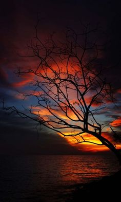 Sunset behind black autumn branches- beautiful!