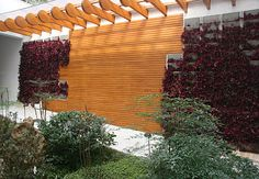 O corredor de acesso ao jardim dos fundos ganhou pérgola e painel de ipê que contrastam com as folhas arroxeadas do lambari-roxo