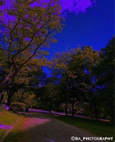 #ba_photography #photo #photography #photographie #retouch #retouche #allrightsreserved #allrightsreserved© #colors #colours #original #uncommon #france #french #art #peps #nature #landscape #blue #purple #trees #parc #park http://tipsrazzi.com/ipost/1506036335680301582/?code=BTmhBFnDioO