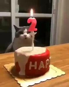 Funny Cute Cats, Cute Funny Animals, Cute Baby Animals, I Love Cats, Crazy Cats, Kitten Love, Kitten Gif, Gato Gif, Video Chat