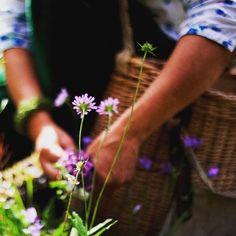 Conoscete il #foraging? È la raccolta di #erbe spontanee. Leggete la storia curiosa di #primitivizia su www.gamberorosso.it.  #food #natura #nature #instagood