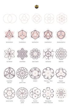 Geometry Matters: Various nature elements that abide by geometric laws and construction patterns. Geometry Pattern, Pattern Art, Pattern Design, Art Patterns, Geometric Designs, Geometric Shapes, Geometric Nature, Sacred Geometry Symbols, Quilt Modernen