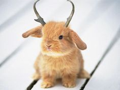 A baby Wolpertinger