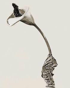 Joan Fontcuberta / Art Work / Herbarium