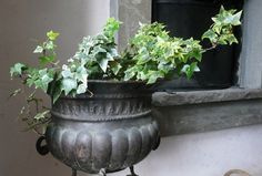 English ivy (Hedera helix) ------------------------------------------------------ A study shows that English Ivy or Hedera Helix is one of the houseplants that reduces airborne fecal-matter particles. It also filters out formaldehyde from the cleaning products