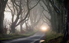 Fog(2560x1600).
