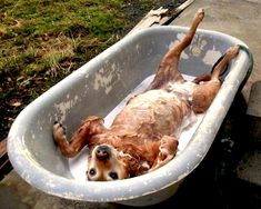 Diy dog bath....You'll have an easier time giving your dog a bath if you use a towel! Just put a folded towel in the bottom of your sink or tub, before you plop you pet inside. Experts say the textured towel will cushion their feet, and keep them from slipping on the wet surface...It'll also give your pet something to dig their nails into, helping them release tension and stress... www.tesh.com
