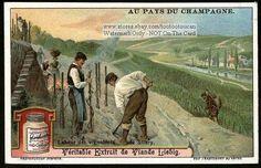 Champagne - Pruning the Grape Vineyard NICE c1920 Card