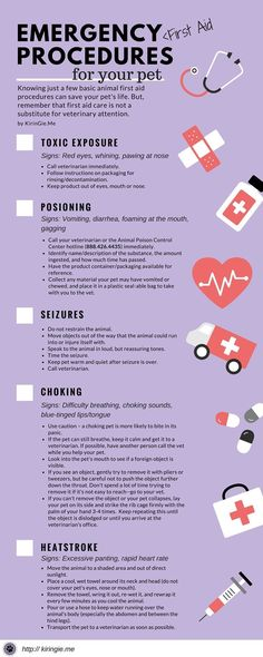 Emergency Pet First Aid Infographic