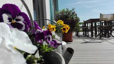 Fiori, sole & cielo  #bagnodelfino42 #flowers #sea #sky #sun #marinaromea
