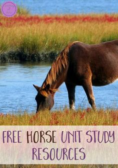Free Horse Unit Study Resources -Something 2 Offer Free Horses, Wild Horses, Horse Camp, Horse Horse, Farm Unit, Animal Science, Animal Activities, Literacy Activities, All About Horses