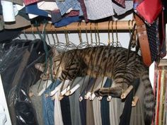 Twas guarding the clothes!