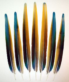 Tail Feathers | Camelot Macaw Tail Feathers - Topaz