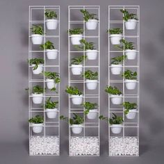 Our Lanna Garden Screens are now available with the option of natural terracotta or colour matched pots. #arkofurniture #lannagardenscreen #greenwall #verticalgarden #indoorplants #officestyle #outdoorfurniture #gardenfurniture #australianmade #australian http://arkofurniture.com.au/buyonline/lanna-garden-screen