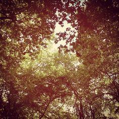 Songs zum Herbst
