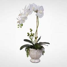 real touch silk orchid arrangement with succulents in a ceramic pot - Silk Orchids