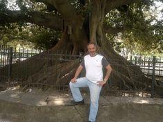 Gomero Gigante de la Plaza San martin