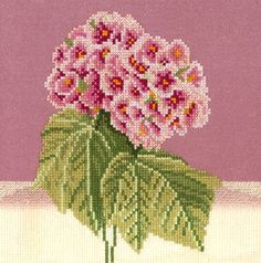 An attractive flower picture with a dusky pink and white background.