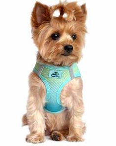 8365407fbdc8b4a3e7cf68ff663af12f ombre pull 45 best dog harness & no pull dog harness images on pinterest dog