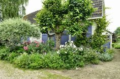 Deep blue shutters, a full and mature flower bed, old brick paving-- the pretty, romantic, and 'wild' garden of Juke Hedig, Dutch artist