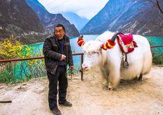 Tibetan Yak by Lou Lu, via 500px