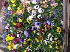 http://www.eattheweeds.com/edible-flowers-part-six/