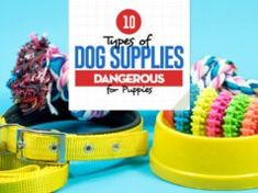 10 Dog Supplies Dangerous for Puppies Fruit Dogs Can Eat, Top 10 Dog Foods, Best Dog Food Brands, Pet Allergies, Dog Weight, Dog Grooming Business, Dry Dog Food, Homemade Dog Food, Dogs
